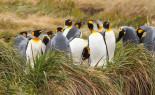 Tierra del Fuego Express incluidos Pingüinos Rey Cruzando el Estrecho de Magallanes