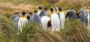 Tierra del Fuego Express incluidos Pingüinos Rey