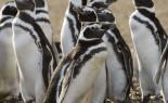 Magallanes Completo. 6 días y 5 noches – Fuerte Bulnes, Milodón, Torres del Paine, Glaciares y Pingüinos