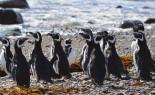Pingüinera Seno Otway en Punta Arenas – Vida natural
